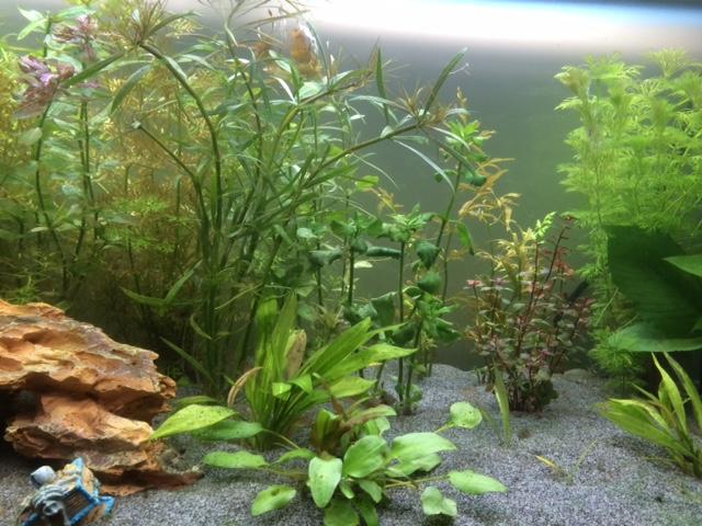 Algues nouveau bac Aqua2111