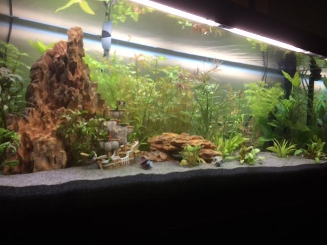 Algues nouveau bac Aqua2112