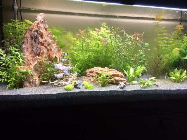 nouveau bac et algues après 11 jours Aquari12