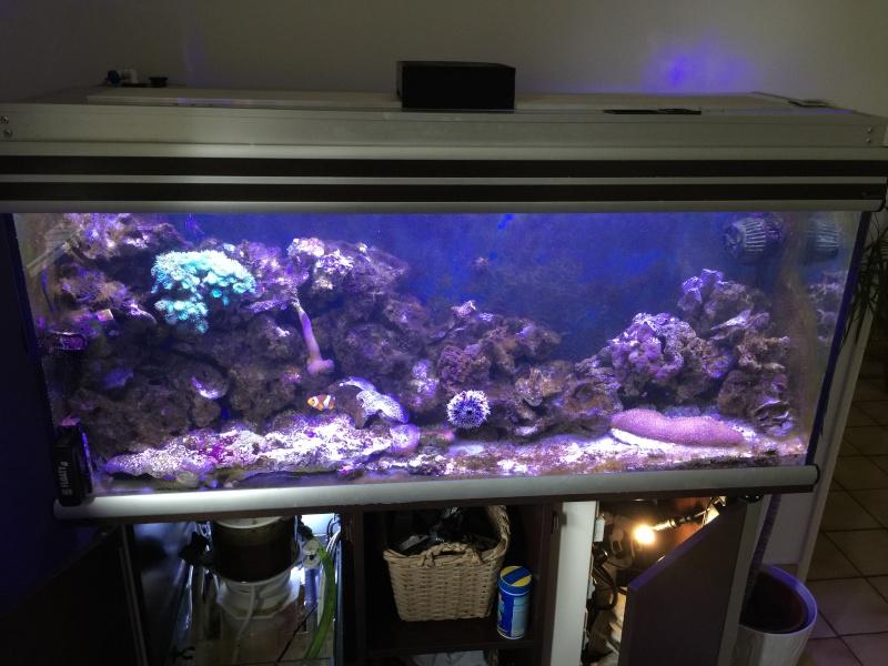 problém aquarium récifal 250l méthode berlinoises.  Img_2213