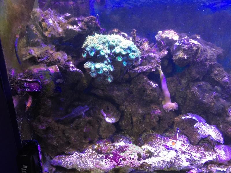problém aquarium récifal 250l méthode berlinoises.  Img_2214