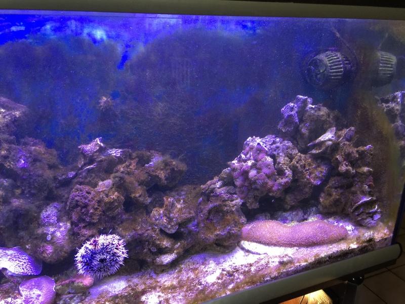 problém aquarium récifal 250l méthode berlinoises.  Img_2215