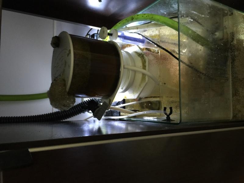 problém aquarium récifal 250l méthode berlinoises.  Img_2216