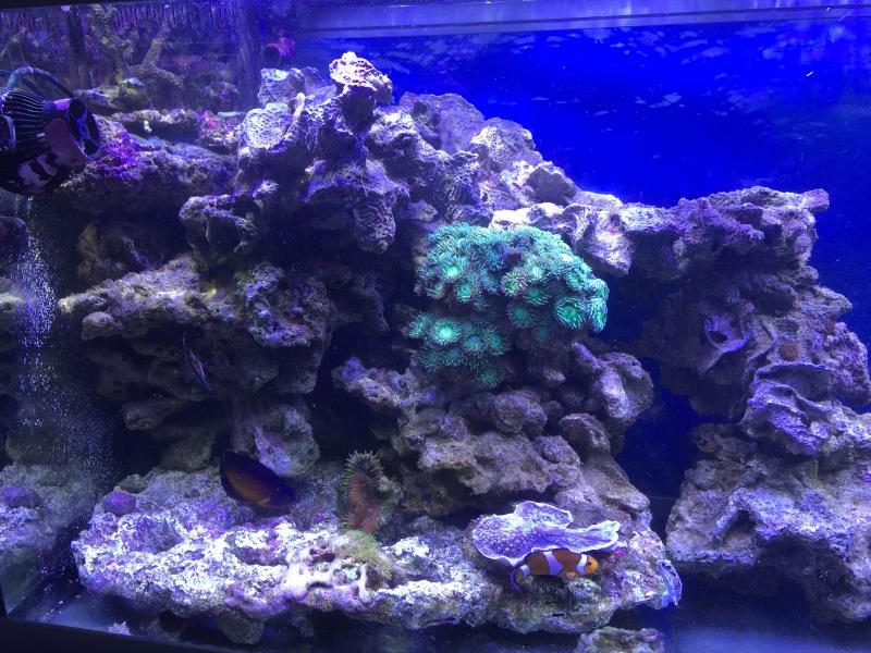 problém aquarium récifal 250l méthode berlinoises.  - Page 3 Img_2219