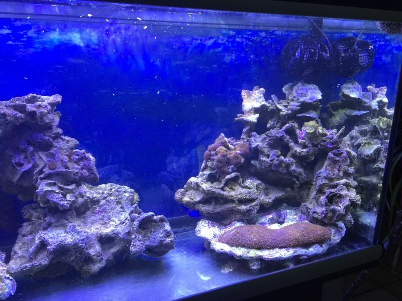 problém aquarium récifal 250l méthode berlinoises.  - Page 3 Img_2220