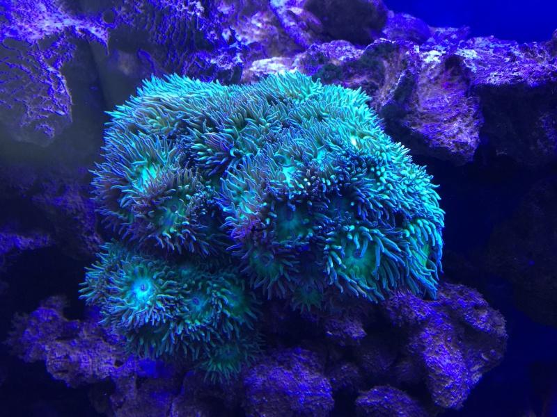 problém aquarium récifal 250l méthode berlinoises.  - Page 3 Img_2310