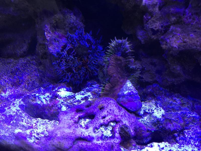 problém aquarium récifal 250l méthode berlinoises.  - Page 3 Img_2311