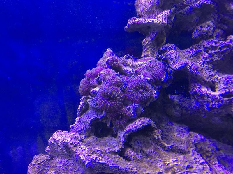 problém aquarium récifal 250l méthode berlinoises.  - Page 3 Img_2313