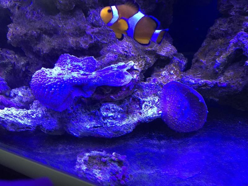 problém aquarium récifal 250l méthode berlinoises.  - Page 3 Img_2314