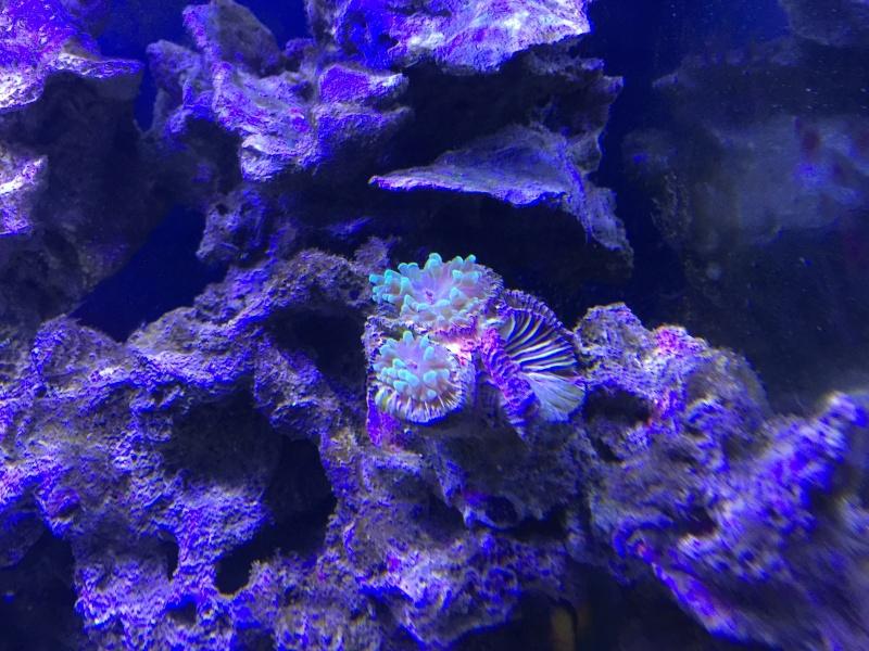problém aquarium récifal 250l méthode berlinoises.  - Page 3 Img_2315