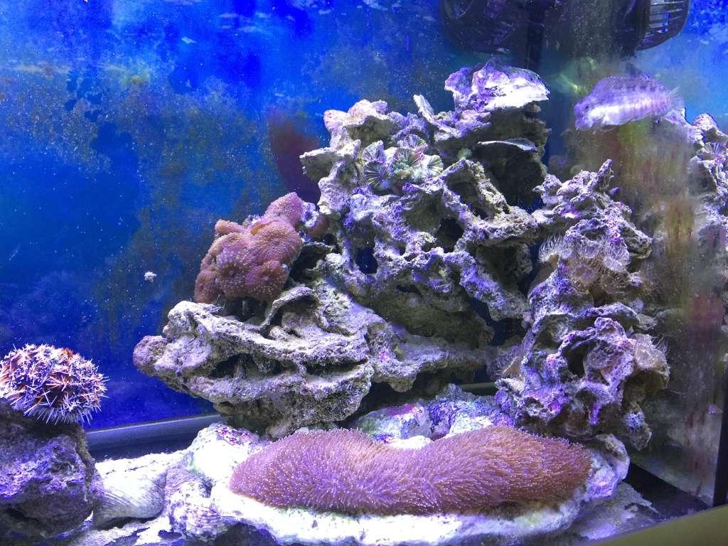 problém aquarium récifal 250l méthode berlinoises.  - Page 4 Img_2316