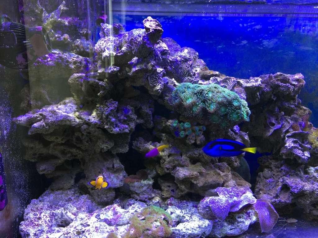problém aquarium récifal 250l méthode berlinoises.  - Page 4 Img_2318