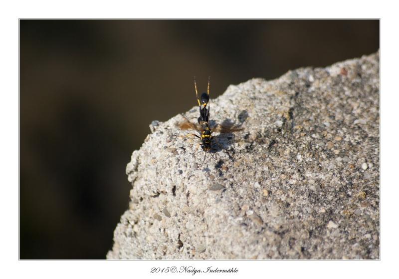 Gruissan, sa faune, et sa flore Cadre129