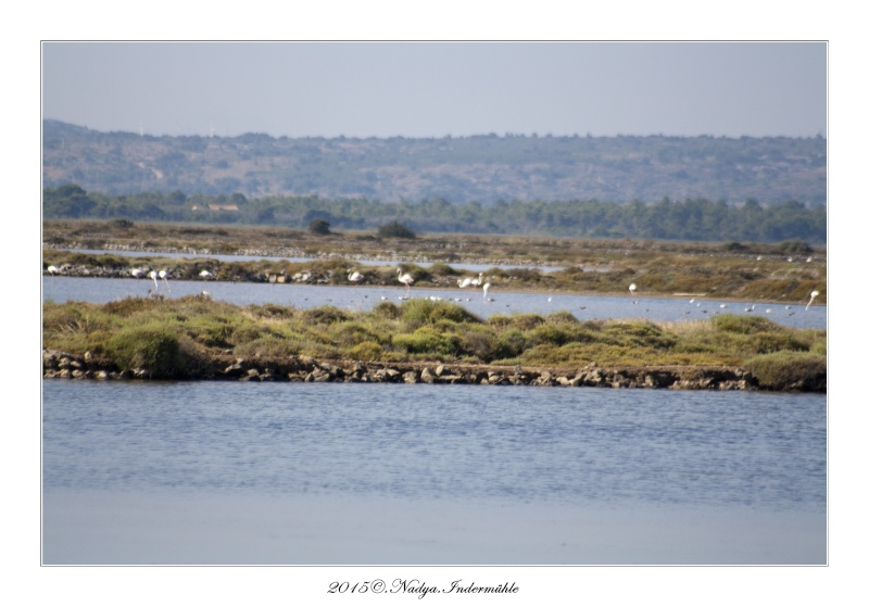 Gruissan, sa faune, et sa flore Cadre131