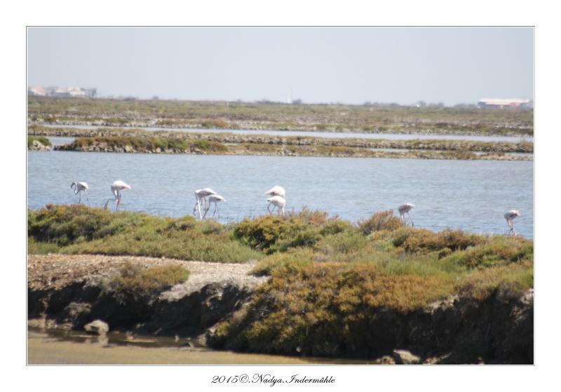 Gruissan, sa faune, et sa flore Cadre140