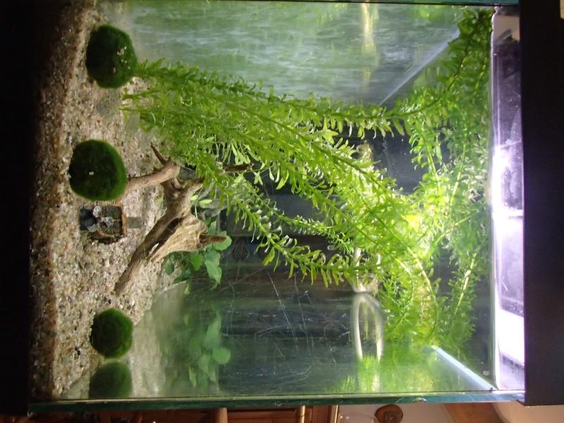 Démarrage aquarium 100L Pa080013