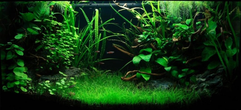 lancement de mon aquarium Aq169910