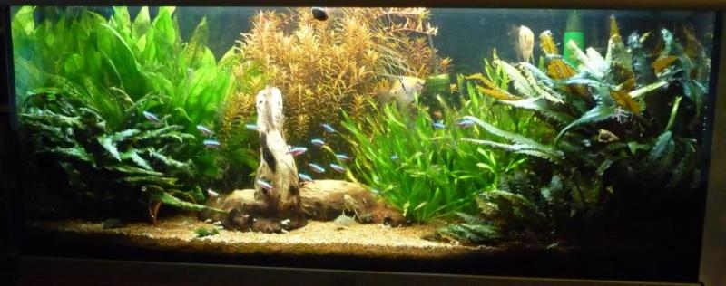 lancement de mon aquarium Aq784p11