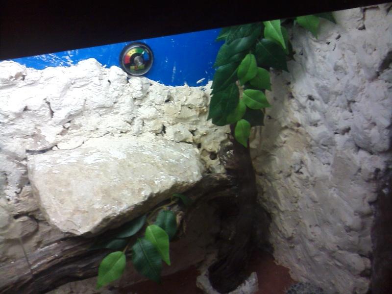 terrarium de mon futur pogona Cam00613