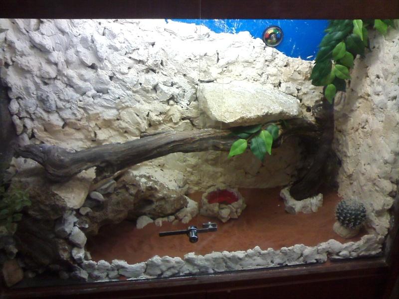 terrarium de mon futur pogona Cam00614