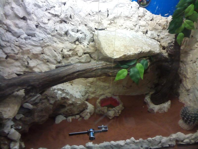 terrarium de mon futur pogona Cam00615