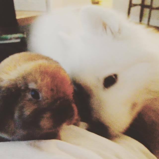 Dog & Bunny: Unlikely friends 12109211