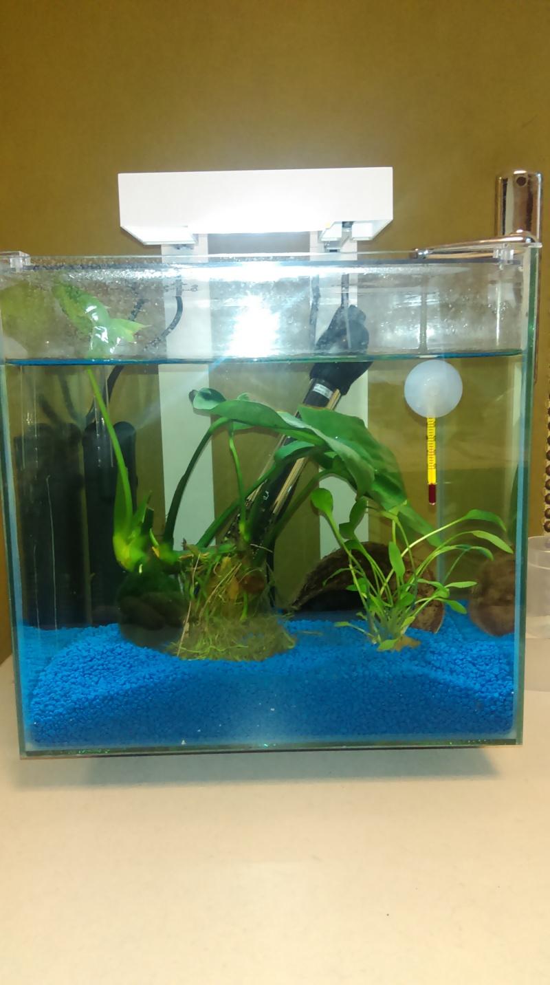 nano aquarium 13l nexus Imag0112