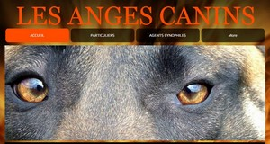Les Anges Canins, Association d'éducation canine Icone_16