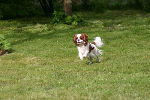 chien dans la nature Photo-11