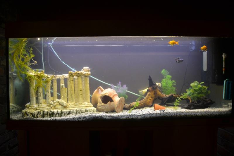 Aide pour mon aquarium Dsc_4113