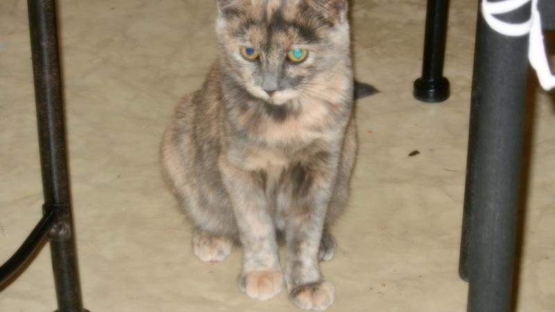 quelques nouvelles de lilou (daisy) adoptée Dscn1613