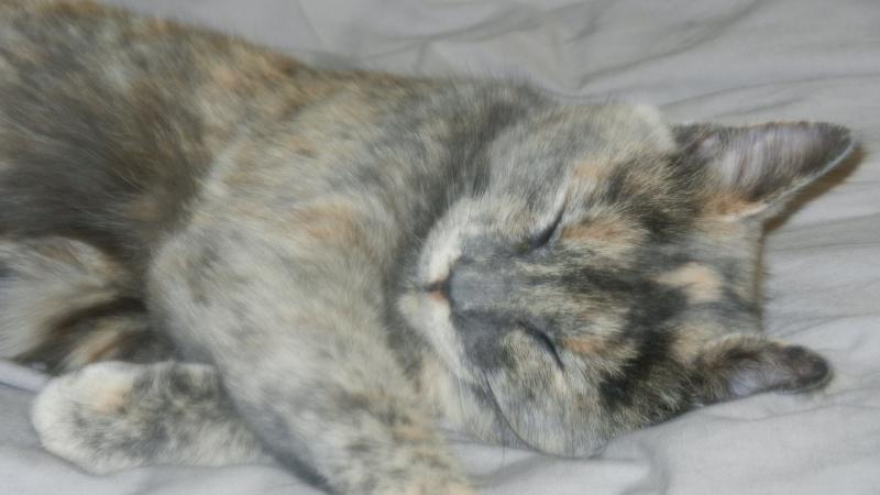 quelques nouvelles de lilou (daisy) adoptée Dscn1618