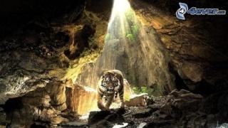 Le QG des braves Tigre-10