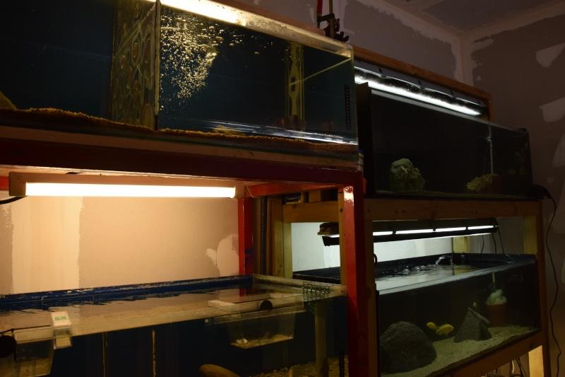 installation fishroom  Dsc_0211
