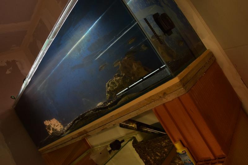 installation fishroom  Dsc_0214