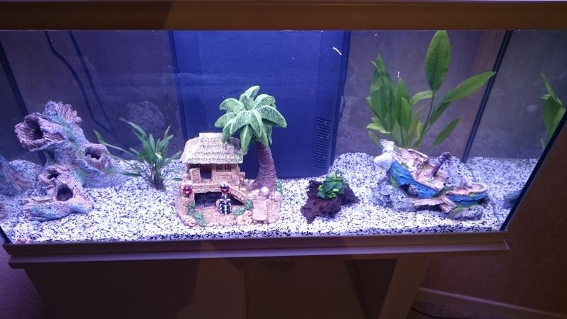 Projet Aquarium 60L - Page 3 Dsc_0012
