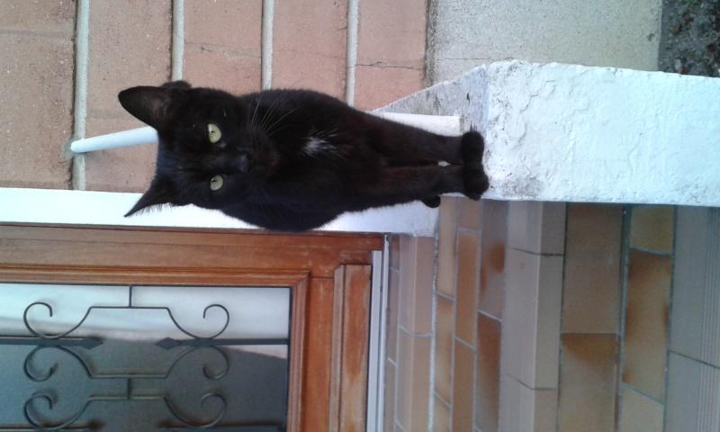 Demande de prise en charge pour petite chatte noire et blanche 20151010