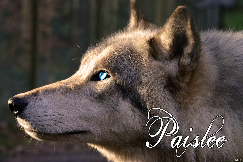 Paislee - Pryvanthros (Complete) Wolf_l10