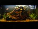 Besoin d'aide pour un futur aquarium svp ? Photo_10