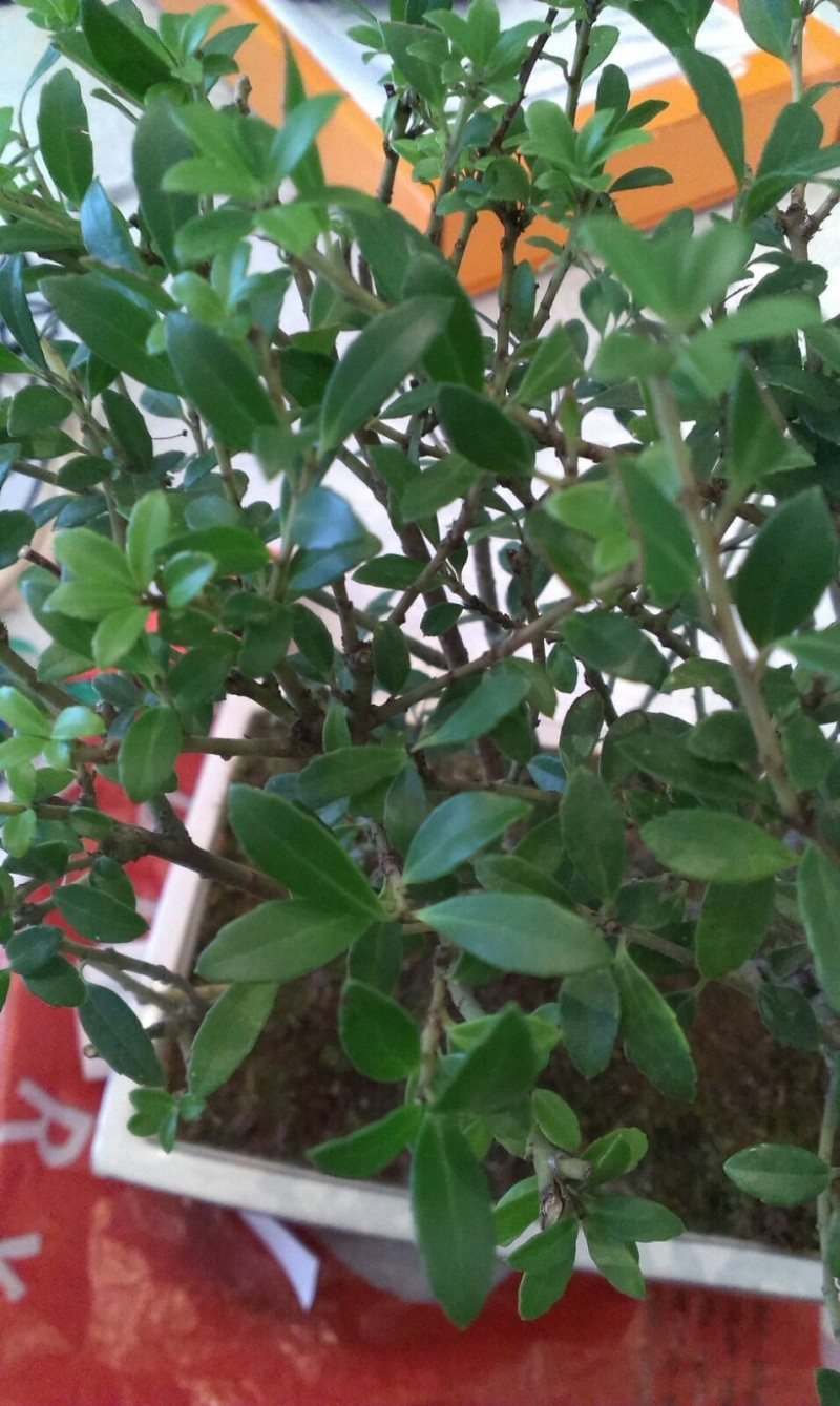 che bonsai è?? Img-2011
