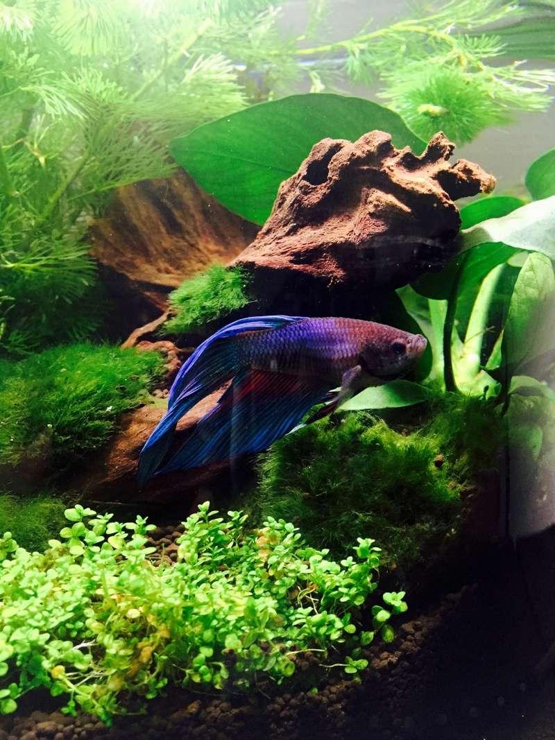 nouvel aquarium ( si vous avez des conseils) Fullsi13