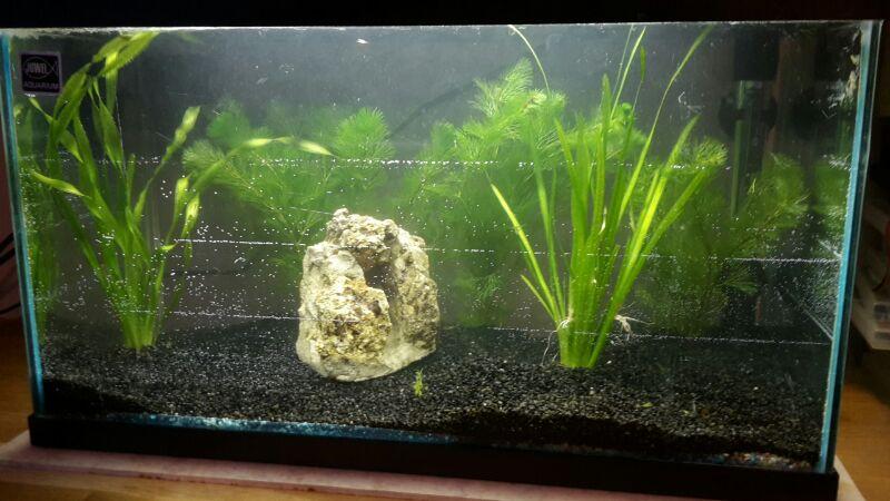 Nouvel aquarium Df835510