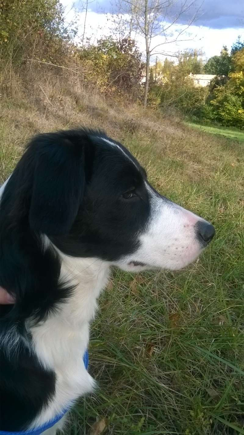 Loucha, border collie 3m10