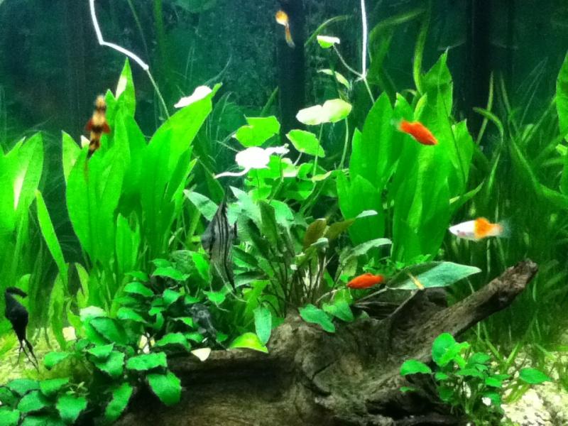 Présentation de mon aquarium Img_0210