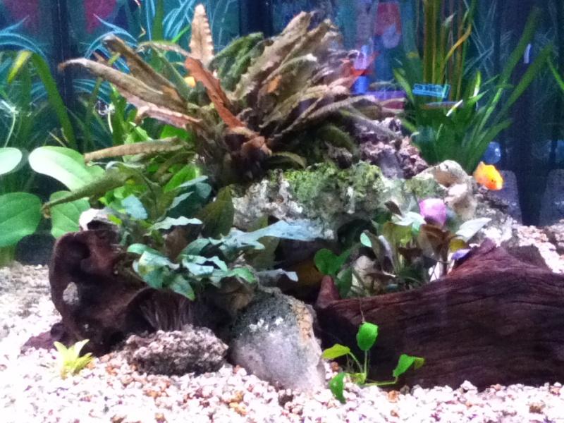 Présentation de mon aquarium Img_0310