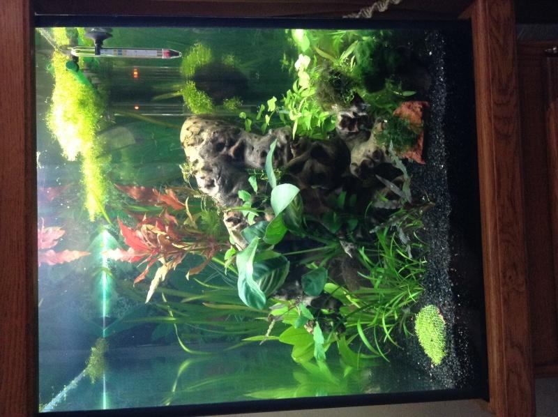 Présentation de mon aquarium Img_0510