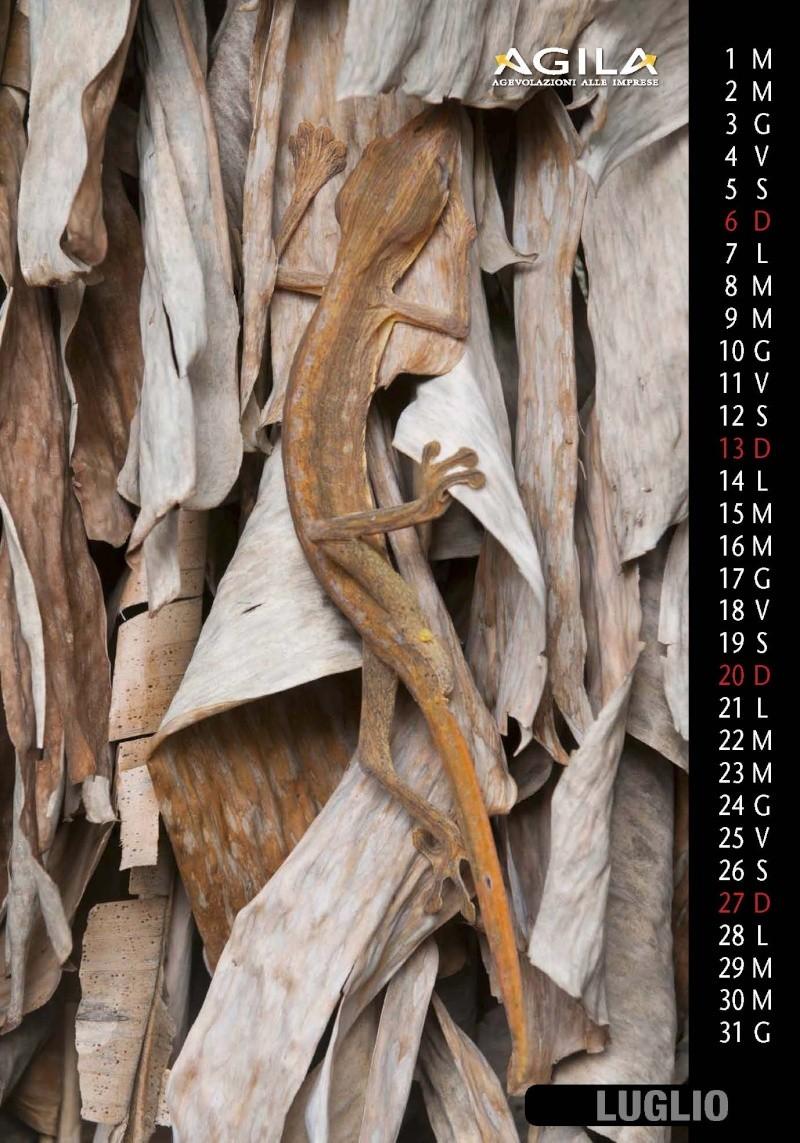 Calendario 2014 Calend51