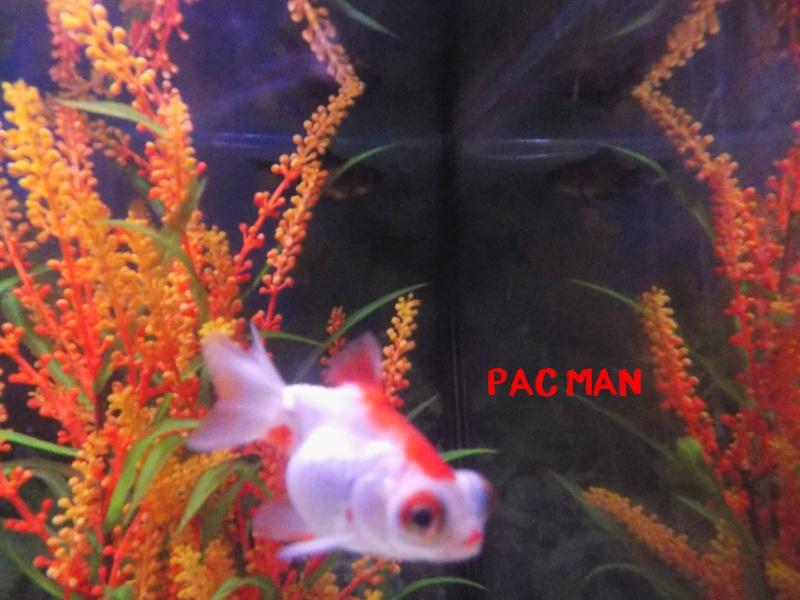 Mon aquarium  Dscn0911