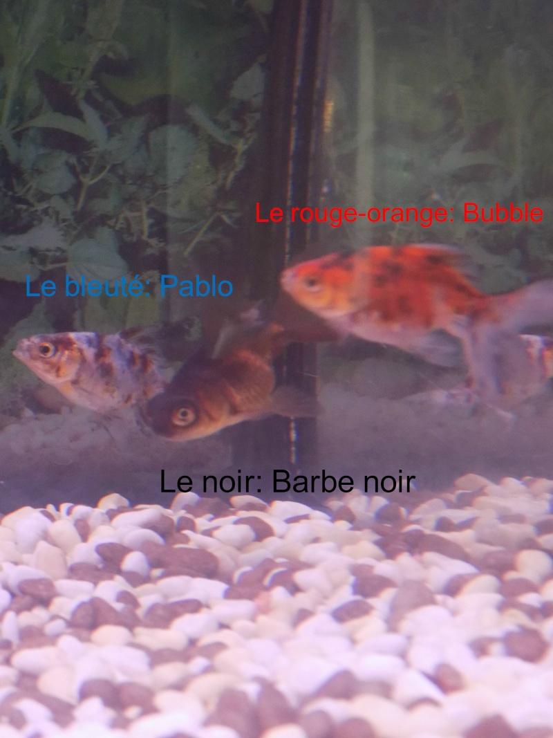 Mon aquarium  Dscn0912