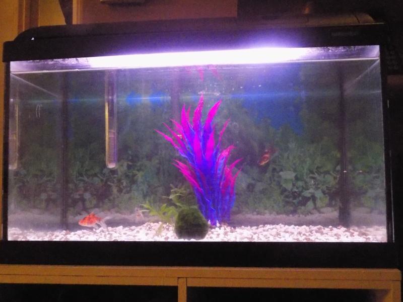 Mon aquarium  Dscn0913